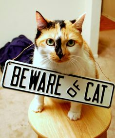 Beware of cat..Im finding this for you Erin
