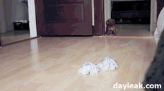 The ninja puppy - Imgur