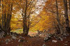 L'autunno sui Monti Simbruini è uno spettacolo da non perdere! #FoliageinItaly #Italia #Italy #ilikeitaly #autumn #autunno #foliage #leaves #Vallepietra #MontiSimbruini #Lazio
