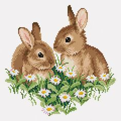 Young rabbits 2
