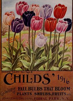 Catalogue of fall bulbs that bloom - plants, shrubs, fruits etc. John Lewis Childs' Inc, Floral Park, N. Garden Catalogs, Seed Catalogs, Seed Art, Vintage Seed Packets, Seed Packaging, Planting Bulbs, Flower Seeds, Vintage Flowers, Rare Flowers
