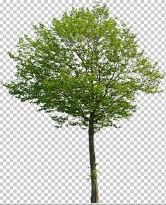 photoshop tree - Google keresés