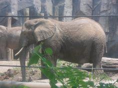 elephant time