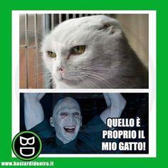 No Maria io esco 🖐 Harry Potter Tumblr, Harry Potter Love, Harry Potter Fandom, Harry Potter World, Italian Memes, Verona, Voldemort, Einstein, Draco Malfoy