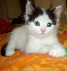 Adı : paris Irkı : Tekir Kedi Cinsiyet : Dişi Kedi  Bu tatlı kız 19 Haziran 2013 de ailemize katıldı, Fazla sosyetik olan havasını Paris ismiyle taçlandırdık. Çok yeniyiz ama çok iyiyiz :) Seviyoruz birbirimizi :) Kendisi yaklaşık 2-2,5 aylık sokak kedisiydi sahiplendik, Mutluyuz:)