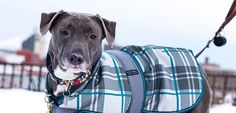 Cold Weather Safety Tips: Keep your pets warm and safe in winter  - ASPCA