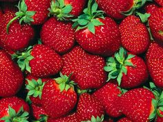 Favorite fruit....the juicy strawberry.... plain or as shortcake!