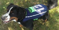 A dog vest like no other Seattle Dog, Dog Shop, Dog Vest, Football Helmets, Outfit, Dogs, Shopping, Outfits, Doggies