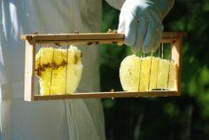 callapsed honey bee comb repair