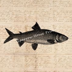 Antique Print Fish Artwork Fishing Fish Home Decor Vintage Print with Aged Script Paper Style Background No.4267 B9 8x8 8x10 11x14 by SparrowHousePrints on Etsy https://www.etsy.com/listing/235652771/antique-print-fish-artwork-fishing-fish