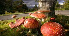 Bing Images - Mushrooms
