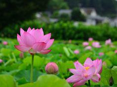 Lotus 2016小山田神社