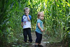 Lost in the corn maze. Apple And Pumpkin Picking, Hay Rides, Corn Maze, Lost, Fall, Autumn