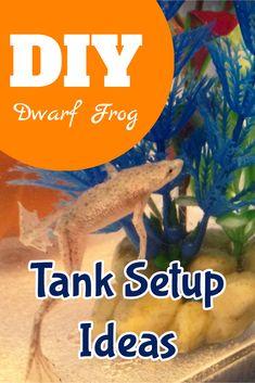 DIY / Dwarf Frog / Tank Setup Ideas Dwarf Frogs, Frog Tank, Pet Frogs, Dog School, Diy Tank, Pet Fish, Tanked Aquariums, Pet Care Tips, Animal Projects