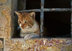 Photo prise par Marcel CoppetLes chats détestent, en général, les odeurs de lavande, de citron ou d'orange. En revanche, ils adorent les effluves de menthe et les relents de javel ! Quand vous nettoyez votre sol à la javel il est donc normal de voir votre chat se rouler par terre.Trouvez la meilleure assurance pour votre animal de compagnie grâce à ce comparateur en ligneDécouvrez d'autres images de Marcel Coppet
