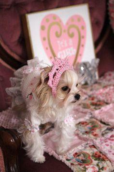 Crochet Dog Tiara, Pet Tiara, Crochet Dog Crown, Princess Tiara, Cat Crown, Dog Crown, Dog Crochet Crown, Special Occasion, Photo prop Dog .