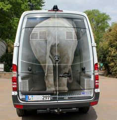 Now this is cool ..! for a second there i thought there was a real elephant in there