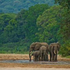 Lake Manyara National Park in Tanzania.  Photo by martinbuzora (Instagram)
