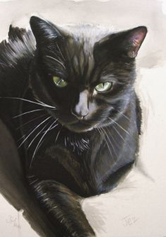 black cat portrait moggy watercolour crayon reddiotch mann made art jenny mann.jpg (246×350)