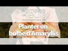 Promesse de Fleurs - YouTube Comment Planter, Planters, Gardens, Spring Bulbs, Plant, Window Boxes, Pot Holders, Flower Planters, Pots