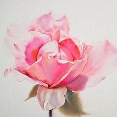 Как же прекрасны розы ЛаФе! @lafewatercolor роскошный цвет и такая нежность! Друзья, а кто-нибудь едет в Америку или Японию в ближайшие месяцы? Акварельные краски хочу заказать. #painting #drowing #lafe #роза #rose #watercolor