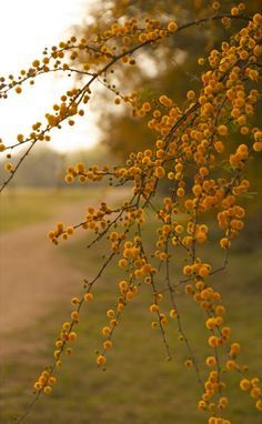 muted fall berries mustard hues