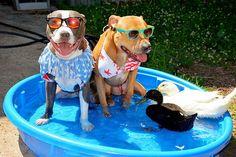 Eu aposto que nunca ocorreu a você que cães, gatos e patinhos poderiam se dar bem, hein? Bem, acontece que eles não só se dão bem, como são inseparáveis!