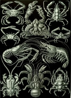 Kunstformen der Natur (Art Forms in Nature): a book of lithographic and halftone prints by German biologist Ernst Haeckel. Designed between 1899-1904, these stunning images helped form the basis of what would become the Art Nouveau movement, influencing architecture, art, and the general design of many everyday objects through the early 20th century.