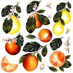 Набор векторных реалистичные лимона и апельсины с цветами для назн — стоковая…