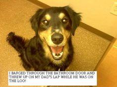 Dogshaming...  My new FAVORITE website!!!!!