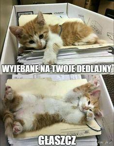 Po co brać leki jak można brać mEmE # Humor # amreading # books # wattpad Wtf Funny, Hilarious, Cat Memes, Funny Memes, Funny Animals, Cute Animals, Polish Memes, Irish Singers, Weekend Humor
