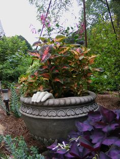 Jeff's out-of-the-ordinary containers in Tennessee - FineGardening Chicken Barn, Purple Plants, Fine Gardening, Garden Projects, Garden Ideas, Window Boxes, Outdoor Fun, Amazing Gardens, Deep Purple