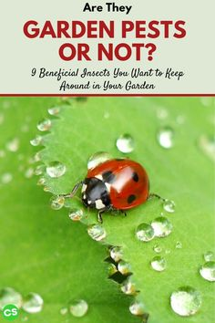 """Unfortunately, most of us have grown up to view most insects as being something to eliminate. Let's explore 9 """"garden pests"""" that you may want to protect. #gardenpests #beneficialinsects #savetheplanet #gardening Organic Gardening, Gardening Tips, Red Beetle, Backyard Water Feature, Beneficial Insects, Tomato Plants, Garden Pests, Growing Vegetables, Beautiful Butterflies"""