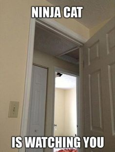 Ninja Cat Watching You