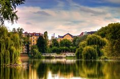 Nature in the City | Berlin - Lietzensee