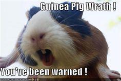 Guinea Pig Wrath meme #guineapigmeme