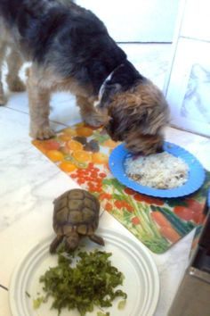 Doggy and turtle love :)