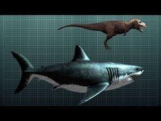 megalodon | The-Nightmarish-Megalodon-Sharkzilla-Shark-Week-2012