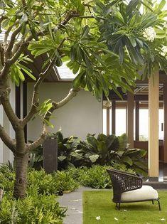 Tropical Garden Design, Tropical Landscaping, Modern Landscaping, Garden Landscaping, House Landscape, Garden Landscape Design, Landscape Architecture, Back Gardens, Outdoor Gardens