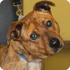 Spca Dogs For Adoption Richmond Va