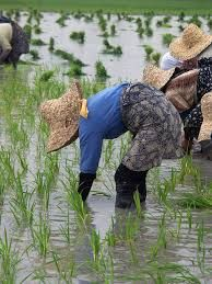 Much of China is lacking fresh water. Urge President Xi Jinping to sign the United Nations Watercourses Convention, a treaty that will provide the necessary steps for China to obtain fresh water. Rice Cake Recipes, Rice Cakes, Tanzania Food, Women In China, Heavy Metal Detox, Home Based Jobs, Rice Paddy, Best Online Jobs, Bobs Red Mill