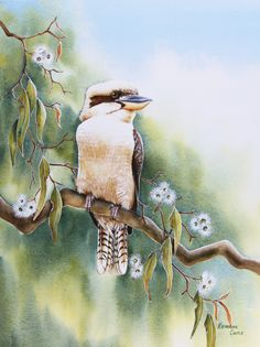 Australian Painting, Australian Birds, Australian Artists, Bird Drawings, Cute Drawings, Animal Drawings, Beautiful Birds, Animals Beautiful, Funky Art