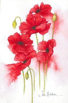 Jan Harbon #art #poppies #watercolor