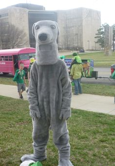 This is the mascot for the Heartland Greyhound Adoption group