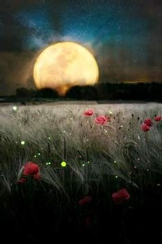 Cool Pictures Of Nature, Cute Love Pictures, Beautiful Photos Of Nature, Beautiful Moon, Green Screen Video Backgrounds, Love Backgrounds, Background Images, Animated Love Images, Images Gif