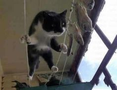 Omnipotent cat aka super kitty