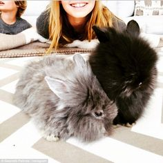 Welcome to the family! Gwyneth Paltrow shared a picture of her new furry additions on her Instagram account on Easter Sunday 2015