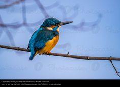 Foto 'Blick in die Ferne - Eisvogel - Kingfisher' von 'Skymountain.de'
