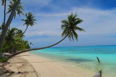 A Week Of Diving & Endless Discovery In Fakarava | X Days In Y