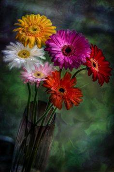 Welcome Spring!!! ©Yasmin Simpson